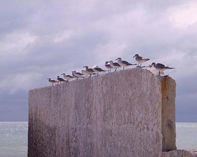 Gulls Poster by Jon Emery