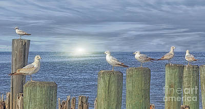 Gulls On The Pier Poster by Tom York Images