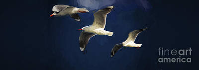 Gulls Up The Wall Poster by Avalon Fine Art Photography