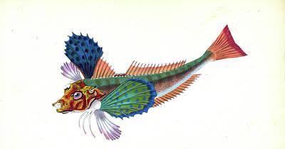 Gumard, Sapphirine, Trigla Hirundo, British Fishes Poster