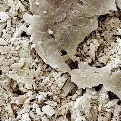 Gypsum Crystals Sem Poster