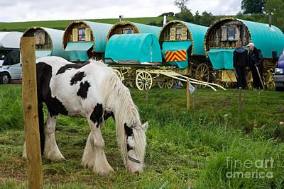Gypsy Cob And Wagons Poster by Liz  Alderdice