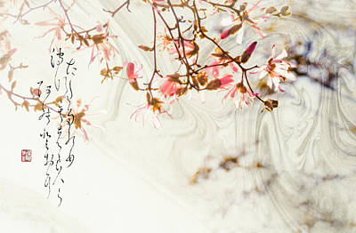 Haiku And Magnolia Blossoms Poster