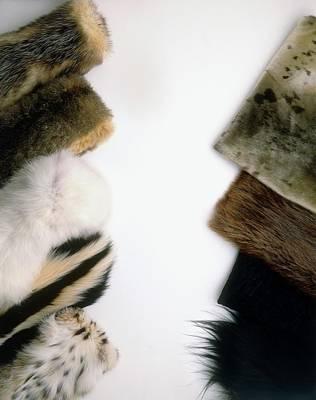 Hairseal Fur Poster