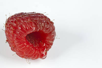 Hairy Raspberry Poster by John Crothers