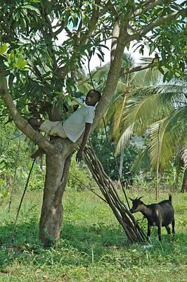 Haitian Goatherd Poster