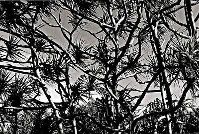 Hala Trees Poster