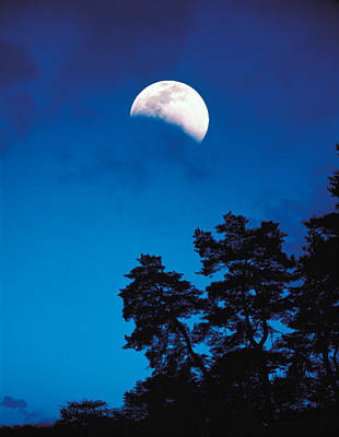 Half-moon Over Trees In Dark Poster