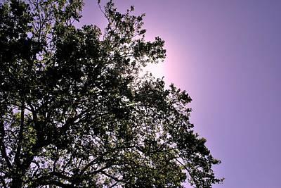 Poster featuring the photograph Half Tree by Matt Harang