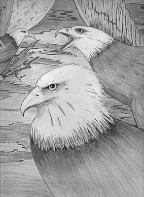 Haliaeetus Leucocephalus Named By Roger Swezey Poster by Richie Montgomery