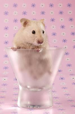 Hamster In Glass Poster