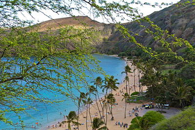 Hanauma Bay Nature Preserve Beach Through Monkeypod Tree Poster by Michele Myers