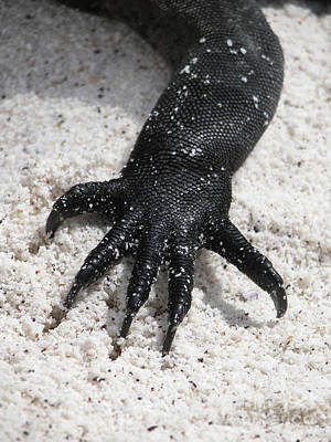 Poster featuring the photograph Hand Of A Marine Iguana by Liz Leyden