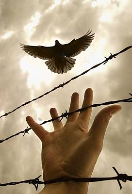 Hand Reaching Out For Bird Poster