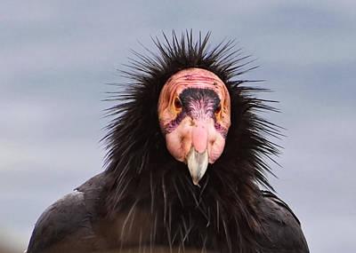 Handsome California Condor Poster