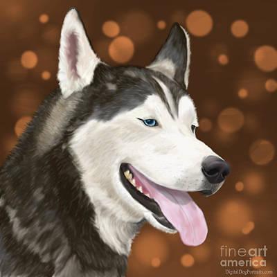 Handsome Siberian Husky  Poster