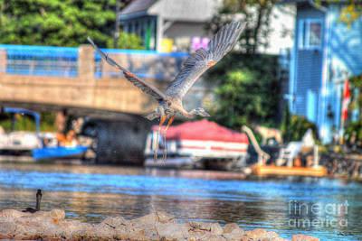 Hang-gliding Heron II Poster by Skye Ryan-Evans