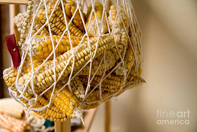 Hanged Dry Organic Corns In A Net Poster