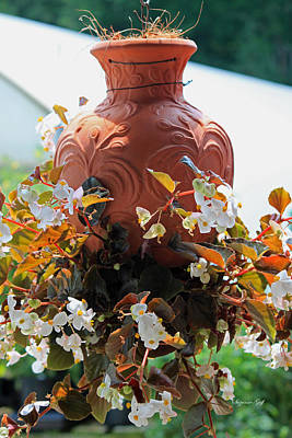 Hanging Begonia Pot Poster by Suzanne Gaff