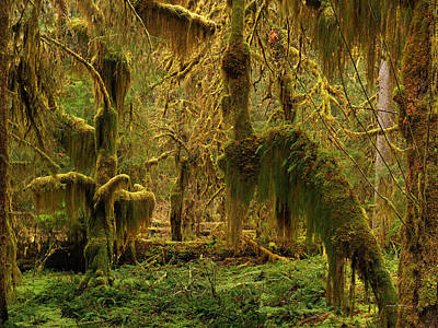 Hanging Moss Poster by Leland D Howard