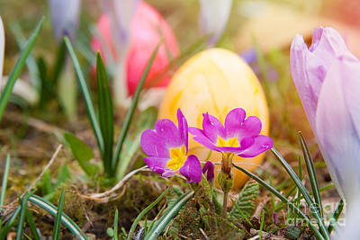 Poster featuring the photograph Happy Easter by Christine Sponchia