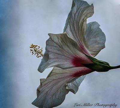 Happy Hibiscus At Biltmore Conservatory Poster by Lori Miller