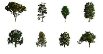 Hardwood Trees Poster by Mikkel Juul Jensen