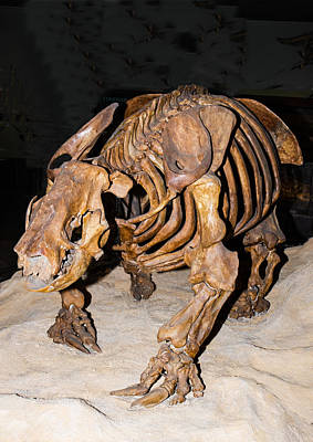 Harlans Giant Ground Sloth Poster