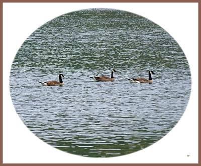 Harmonious Canada Geese Poster