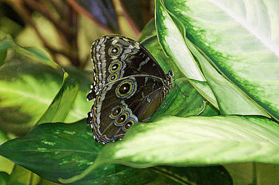 Harmony Poster by Aimee L Maher Photography and Art Visit ALMGallerydotcom