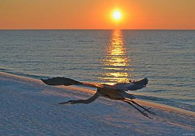 Poster featuring the photograph Harry The Heron Takes Flight To Reposition His Guard Over Navarre Beach At Sunrise by Jeff at JSJ Photography