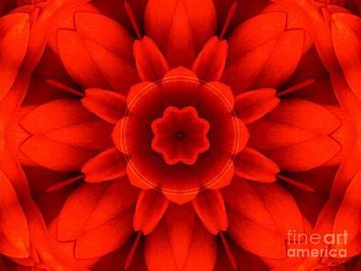 Harvest Bloom Poster by Elizabeth McTaggart