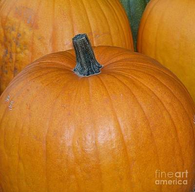 Harvest Pumpkins Poster by Chalet Roome-Rigdon