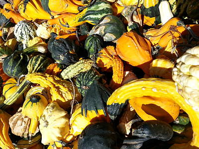 Poster featuring the photograph Harvest Squash by Caryl J Bohn