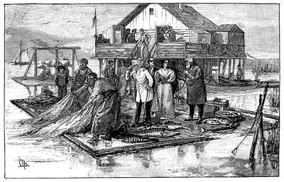 Harvesting Caviar Poster