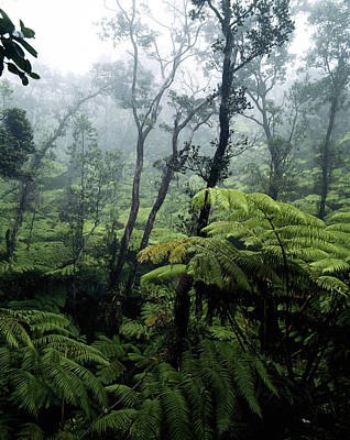 Hawaii Islands, View Of Rainforest Poster by Douglas Peebles