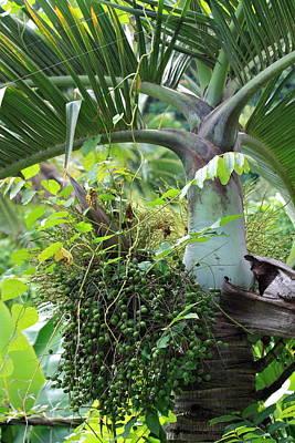 Hawaiian Palm Inflorescence  Poster by Karon Melillo DeVega