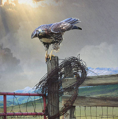 Hawk About To Launch Poster by R christopher Vest