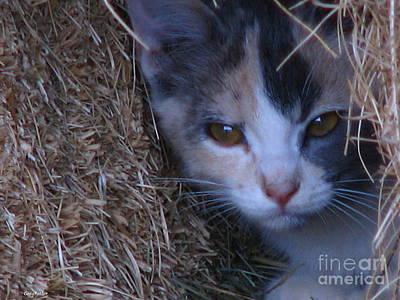 Haystack Cat Poster