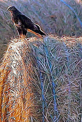Hay Bale Hawk Poster by Jim Pavelle