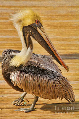 Hazards Of Bird Life Poster