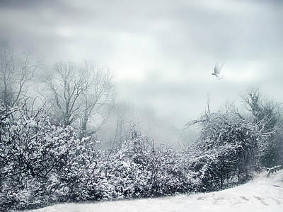 Hazy Shade Of Winter Poster by Jessica Jenney