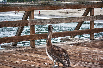 hd 392 hdr - Pelican On The Pier Poster by Chris Berry