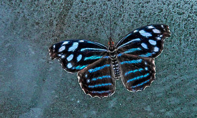 Hdr Butterfly Poster by Elaine Malott