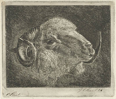 Head Of A Ram With Twisted Horns Backward Poster by Artokoloro