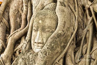 Head Of Buddha Ayutthaya Thailand Poster