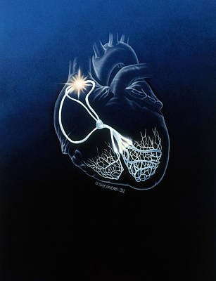 Heart Conduction System Poster by Bob L. Shepherd