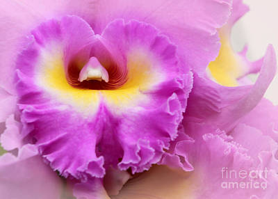 Heart Of A Frilly Pink Orchid Poster