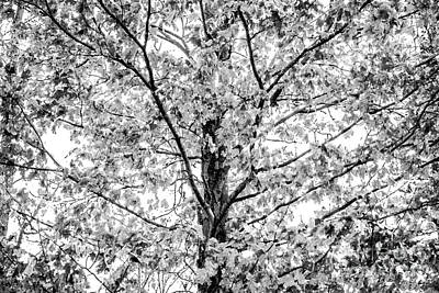 Heart Of A Tree Black And White Poster by Miss Dawn