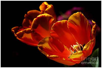 Heart Of The Flower Poster